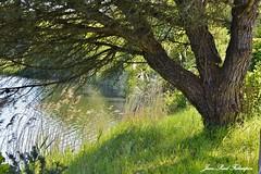 Breizh Nature (jean-paul Falempin) Tags: arbre etang nature nikonpassion