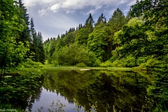 Der Schwarze Teich im Bornwald (Andi Fritzsch) Tags: teich pond pound natur nature naturephotography landschaft landscape landscapephotography erzgebirge oremountains wald wasser forest water baum tree trees himmel blauerhimmel sky blusky wolke wolken cloud clouds cloudscapephotography nikon nikond7100 tamron tamron18270mm fantasticnature flickerunited flickerunitedaward