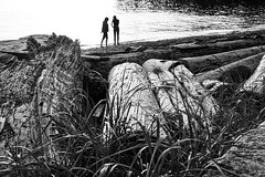the beachcombers (bluechameleon) Tags: sharonwish beach blackandwhite bluechameleonphotography englishbay foliage grasses lines logs ocean people seawall shapes silhouette summersolstice sunset texture water ngc