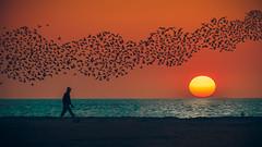 All Fly Away (dctsct) Tags: nikond90 d90 ocean beach nikon flock sunriseset dslr colorful birds orange sunrise sunrising sun wdr