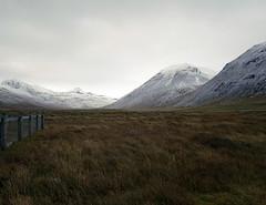 sheep pastures and mountains (lawatt) Tags: mountain snow 120 film 50mm iceland farm hasselblad pasture 400 portra westfjords árneshreppur