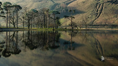 Buttermere reflections (Lumen01) Tags: lake lakedistrict water reflection trees shoreline nikon d800 on1 on1raw cumbria buttermere
