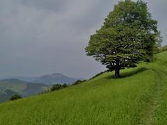 Izarraitz (eitb.eus) Tags: eitbcom 19464 g1 tiemponaturaleza tiempon2019 monte gipuzkoa aia iñakiletamendi