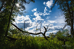Spring in Rogalin Landscape Park (Michał Banach) Tags: nikkor24120mmf40 nikond850 poland polska rogalin rogalinlandscapepark wielkopolska bluesky clouds green landscape nature outdoor outside park spring tree trees mosina greaterpolandvoivodeship