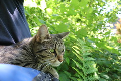 Chilling with Holly (istrahinic) Tags: flicker flickers nature cat chill green rest