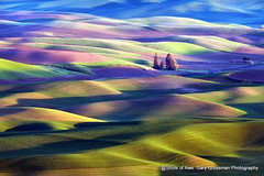 First Light (Gary Grossman) Tags: palouse dawn morning early sunrise landscape hills farmland wheat lentils spring may washington northwest garygrossman garygrossmanphotography firstlight landscapephotography steptoebutte pacificnorthwest