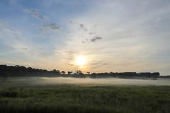 misty morning (Yuki (8-ballmabelleamie)) Tags: chainolakesstatepark dew mist haze fog field prairie scenic scenery landscape sunrise