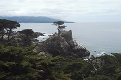 The Lone Cypress Tree, 17-Mile-Drive, California (Tiina Johanna) Tags: asilomar pacificgrove monterey carmel pebblebeach 17miledrive california usa beach whitesand pacificocean kalifornia lonecypresstree cypress