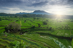 Karang Asem Rice Terrace