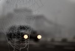 Cobweb morning (Staropramen1969) Tags: morning fog car cobweb morgennebel auto spinnennetz