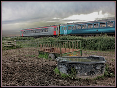 CATTLE CLASS (OLD GIT WITH A CAMERA) Tags: