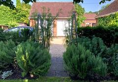 Old Swan House (HerryLawford) Tags: dill euphorbia