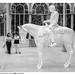 Horse and Rider (Charles Ray)