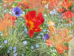 garden (Sonja Parfitt) Tags: tm g gg gt