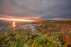 California Light (Rennett Stowe) Tags: california canon canoneos5dmarkiv flowers sunset vacation girlfriend wife californiacoast oceansunset oceanflowers superbloom travel sexy beautiful garden colorful plateau meadow environmental sensual creativecommons coastline wives opensource girlfriends sustainability canoncamera coastalcliffs environmentalstudies coastalmeadow naturalgarden environmentalsustainability americancoast californiacoastl usa wildflowers blooming summer woman sports clouds botanical freedom spring dangerous women botany steep wimen strangeclouds dangerousphotography trending flowercoveredcliffs time timetravel total careful joyous serenity mystical serendipity serendipities goodness god faith wilderness development blessed protectedwilderness protectedcoastline limitingdevelopment inspiration inspirational inspiring