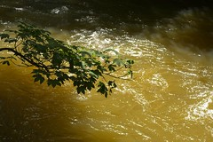 Churnet (Tony Tooth) Tags: nikon d7100 sigma 70mm water river riverchurnet leaves oakamoor staffs staffordshire