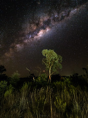 Stars, mars and snakes (Eifeltopia) Tags: karijini outback stargazing starry night milkyway mars bushes nationalpark campground scary travel roadtrip australia sky core stars southernhemisphere astrophotography galaxy clearsky