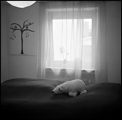 Kuscheltier (-; (jo.sa.) Tags: zimmer eisbär fenster analog analogefotografie bw schwarzweiss rollfilm rodinal