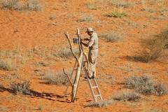 Willem... les lions ont tout cassé ! - réparations/repairs (safrounet) Tags: ktpcamps kieliekrankie kgalagadi southafrica afriquedusud semiarride semiarrid sand sable waterhole pointdeau