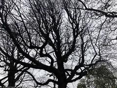 arbre-avec-branches© (alexandrarougeron) Tags: photo alexandra rougeron arbre paysage urbain ville couleurs vie flickr