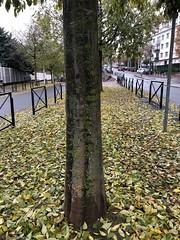 tronc-feuille-en-ville© (alexandrarougeron) Tags: photo alexandra rougeron arbre paysage urbain ville couleurs vie flickr