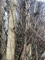 arbre-fourni-franches© (alexandrarougeron) Tags: photo alexandra rougeron arbre paysage urbain ville couleurs vie flickr