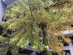 arbre-vert-cadré© (alexandrarougeron) Tags: photo alexandra rougeron arbre paysage urbain ville couleurs vie flickr