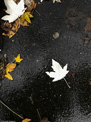 feuille-au-sol© (alexandrarougeron) Tags: photo alexandra rougeron arbre paysage urbain ville couleurs vie flickr