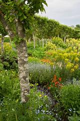 Loseley Park garden (tonybill) Tags: flowers gardens loseleypark may miscellaneous sonya7riii sonyfe24105mmf4 surrey bokeh