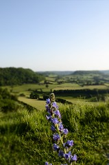 Bluebell (Bumblebonce) Tags: bluebell coaley peak