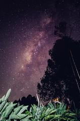 Ave del paraíso (wujuanca) Tags: longexposureshots longexposure largaexposición astrofotografía astrophotography vialáctea milkyway nightshot night star nikond5100 colombia