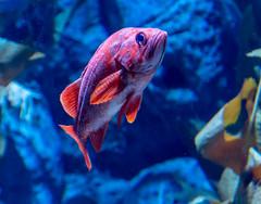 Tropical Fish (Merrillie) Tags: fish holidays water seacreatures tropicalfish touristattraction aquarium