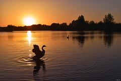 Last night's golden sunset! (Nina_Ali) Tags: hazysunset twilight peace serenity tranquility sunshine lake water goldenhour silhouette sunset lastlight