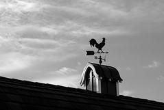 Bellevue BW Exercise 6-26-84.jpg (Michael Burke Images) Tags: weathervane bw kelseycreekpark barn bellevue