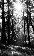 Bellevue BW Exercise 6-26-90.jpg (Michael Burke Images) Tags: bw bellevue sunstar kelseycreekpark