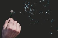 24/52 Fast Shutter Speed (Contebar) Tags: fast shutter motion dandelion wind barbara conte black foreground speed