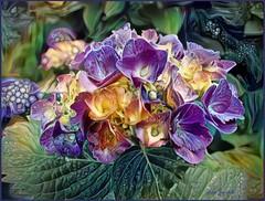 Hydrangea Dream 3 (done by deb) Tags: deepdreamgenerator digitalflowerpainting digitalart digitalpainting vividcolor brightcolors hydrangeas