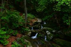 Il torrente nella foresta (supersky77) Tags: oropa piemonte alps alpi alpes alpen cascata waterfall longexposure stream