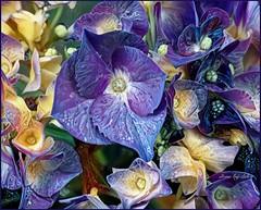 Hydrangea Dream 2 (done by deb) Tags: deepdreamgenerator digitalflowerpainting digitalart digitalpainting vividcolor brightcolors hydrangeas