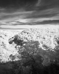 glenaladale-2751-ps-w (pw-pix) Tags: gorge mitchellrivergorge rocky hilly steep terrain trees water river hills sky clouds sunny rock rocks bushes bush plants adaptedlens nikon142428afs nikkor1424mm128ged nikkor142428 nikon142428 bw blackandwhite monochrome sonya7 irconvertedsonya7 850nminfrared ir infrared mitchellrivernationalpark mitchellriver belowstonycreekcreek belowtheweirsite glenaladale eastgippsland victoria australia peterwilliams pwpix wwwpwpixstudio pwpixstudio