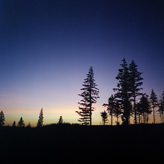 Clear Cut (Aaron Bieleck) Tags: 500cm hasselblad film hasselblad500cm 120film analog 6x6 square filmisnotdead mediumformat wlvf sunset fujipro160s trees silhouette oregon mthoodnationalforest outdoors 60mmct clearcut