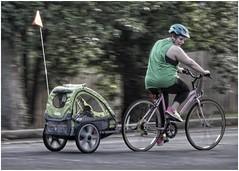 Mom Takes Her Little One for an Evening Ride   Red Oak neighborhood   Marietta, GA (steveartist) Tags: woman mom mother bicycles schwann street trees motion fence bokeh flag helmet trailer bicycletrailer snapseed sonydscwx220 babykidtrailer photobystevefrenkel