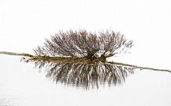 Wenn es taut (KaAuenwasser) Tags: weide zwergweide baum strauch bodendecker alpen spiegelung see wasser oberfläche schnee eis hochalpen ast äste holz ufer rand 2019