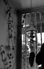 (eelend) Tags: black white corner cafe madrid sunlight window plant lamp bars