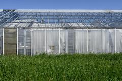 Abandoned greenhouse (AstridWestvang) Tags: abandoned industry nursery plant remains tønsberg vestfold