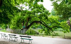 Fenced tree (HFF) (KPPG) Tags: hff fence zaun park baum tree bench bank paris france