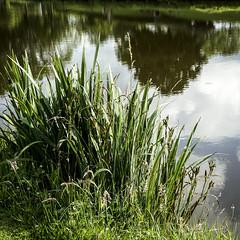 au bord de l'eau (jemazzia) Tags: extérieur exterior esterno outside äubere buitenkant étang pond teich lagoa stagno estanque vijver reflets reflecties reflexiones riflessioni reflexôes reflexionen reflexions