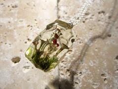 Cladonia gracilis and C. bellidiflora (chaerea) Tags: cladonia lichen pixiecup britishsoldierlichen fungi algae apothecia nature forest forestfloor woodland naturejewelry fungijewelry lichenjewellery mossjewellery