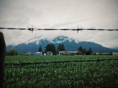 Country & Mountains. (thnewblack) Tags: huaweip30pro leicaoptics chilliwack britishcolumbia farm outdoors gloomy mountains vsco smartphone cameraphone