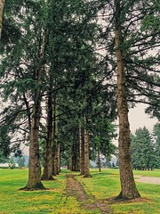Cart path. (thnewblack) Tags: huaweip30pro leicaoptics smartphone cameraphone trees chilliwack golfcourse britishcolumbia vsco